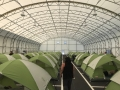Tacoma-Shelter